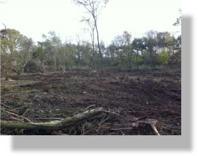 A woodland that has been cleared of brash