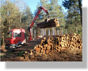 Cut to length timber being loaded onto haulage